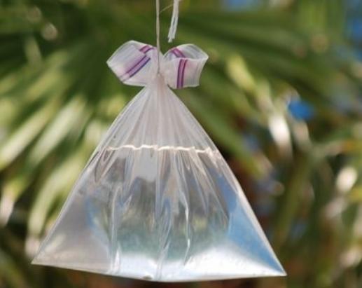 Mẹo đuổi ruồi đơn giản, hiệu quả chỉ bằng nguyên liệu tự nhiên - Ảnh 5