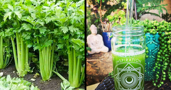 10 thực phẩm giúp giảm tích nước, hỗ trợ giảm cân nhanh - Ảnh 4