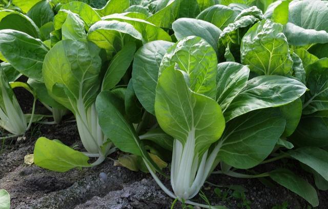 Dù xào rau gì chỉ cần thêm bước này đảm bảo rau xanh mướt - Ảnh 1