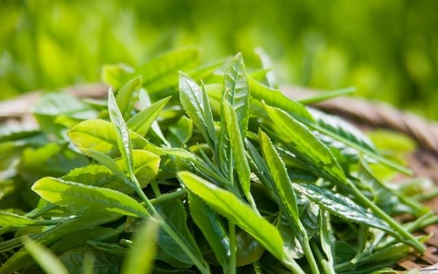Nấu nước lá trà xanh để rửa mặt 2 lần mỗi ngày, da bật tông trắng mịn như bông bưởi mà chẳng cần mỹ phẩm - Ảnh 1