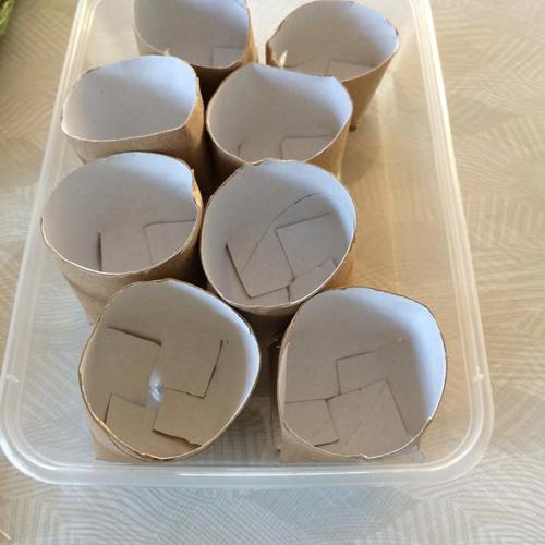 Tận dụng lõi giấy vệ sinh để trồng hành lá xanh mơn mởn tại nhà - Ảnh 3