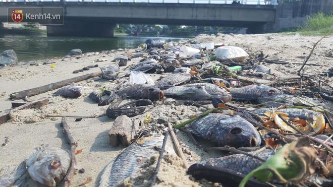 Cá chết hàng loạt, bốc mùi hôi thối ở bãi biển Đà Nẵng do nước xả thải - Ảnh 2