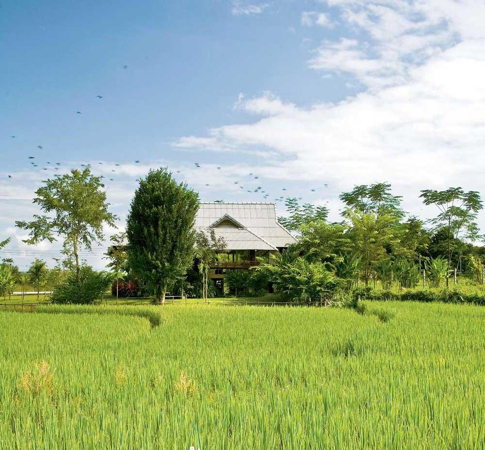 Nhà cấp 4 với thiết kế đẹp lãng mạn giữa cánh đồng lúa xanh tươi ở ngoại ô - Ảnh 1