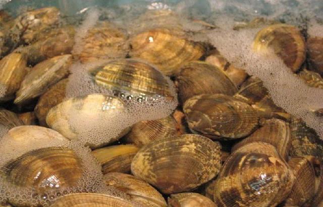 """Người Nhật chỉ mất 10 phút để nghêu, sò nhả hết cát, rau héo được """"hồi sinh"""", thịt cá tươi roi rói nhờ cách pha nước đơn giản không ngờ - Ảnh 2"""