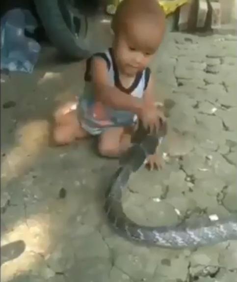 Clip bé trai đánh bôm bốp vào đầu rắn khiến cộng đồng mạng tức giận - Ảnh 1