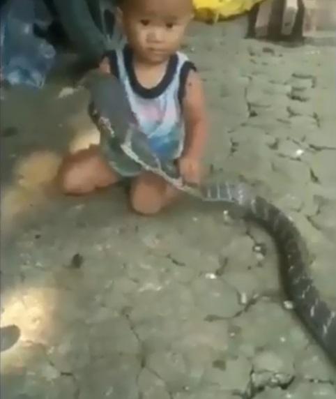 Clip bé trai đánh bôm bốp vào đầu rắn khiến cộng đồng mạng tức giận - Ảnh 2