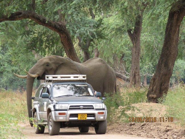 Kiểm tra lỗ thủng kỳ lạ trên đầu chú voi, bác sỹ thú y phát hiện sự thật đau buồn nhưng cũng bất ngờ vì cách hành xử của con vật - Ảnh 3
