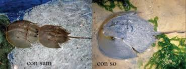 Ngộ độc chết người chỉ vì nhầm lẫn so biển với sam biển: Cách phân biệt chuẩn xác theo hướng dẫn của chuyên gia - Ảnh 1