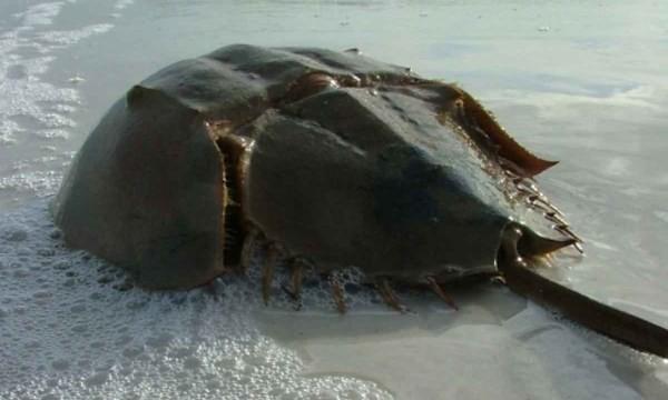 Ngộ độc chết người chỉ vì nhầm lẫn so biển với sam biển: Cách phân biệt chuẩn xác theo hướng dẫn của chuyên gia - Ảnh 2