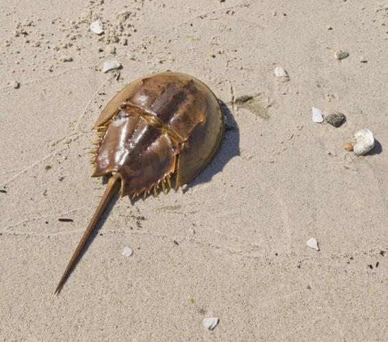 Ngộ độc chết người chỉ vì nhầm lẫn so biển với sam biển: Cách phân biệt chuẩn xác theo hướng dẫn của chuyên gia - Ảnh 4