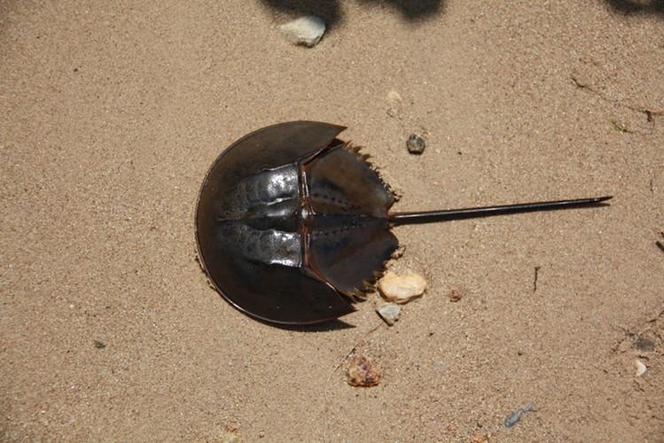 Ngộ độc chết người chỉ vì nhầm lẫn so biển với sam biển: Cách phân biệt chuẩn xác theo hướng dẫn của chuyên gia - Ảnh 5