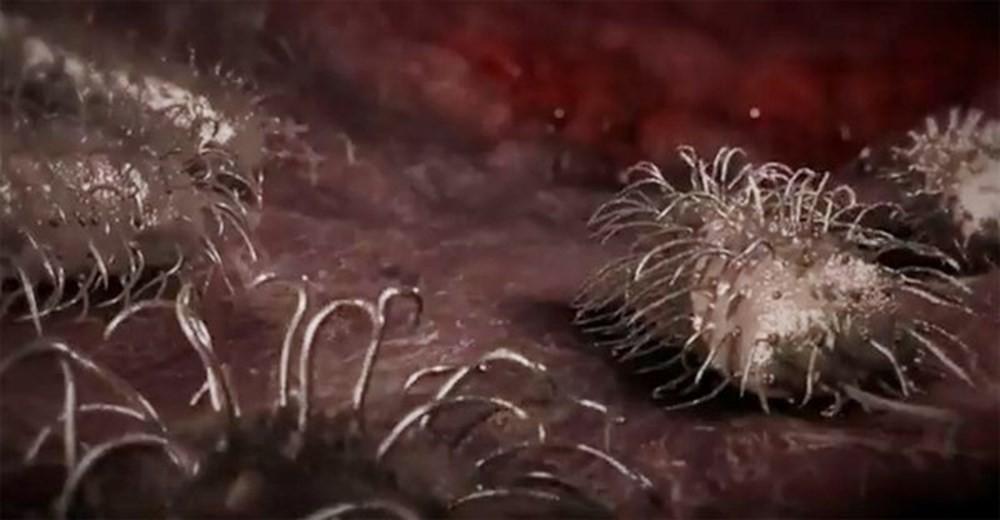 Xuất hiện thêm người tử vong do vi khuẩn ăn thịt người sau khi ăn hàu sống: Đây là những gì bạn cần biết! - Ảnh 2