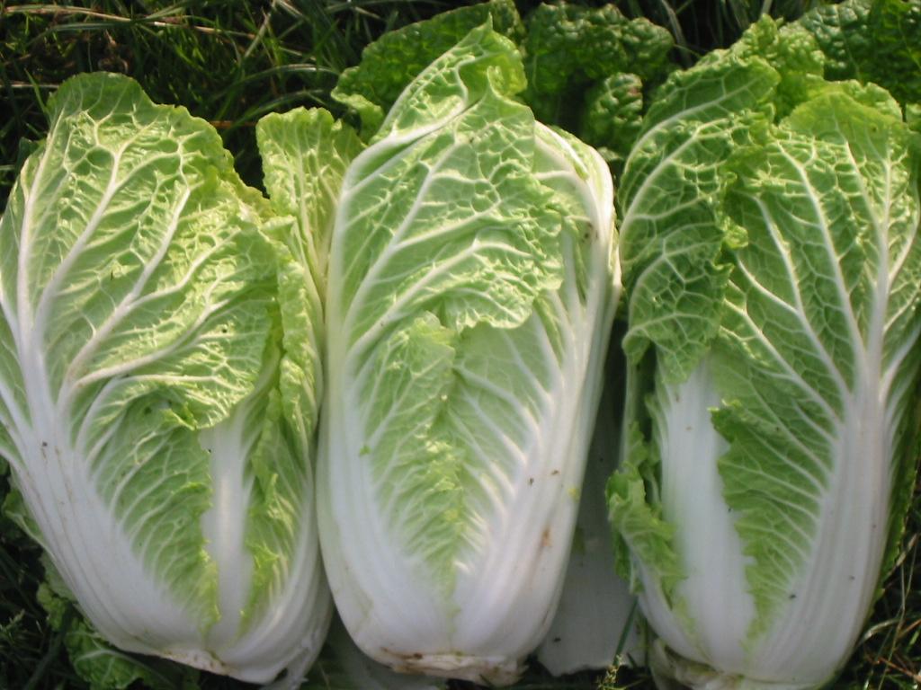 Ngày cuối tuần rảnh rỗi, lấy vài thùng xốp bỏ đi trồng cải thảo theo cách này, quanh năm có rau sạch ăn không hết - Ảnh 4