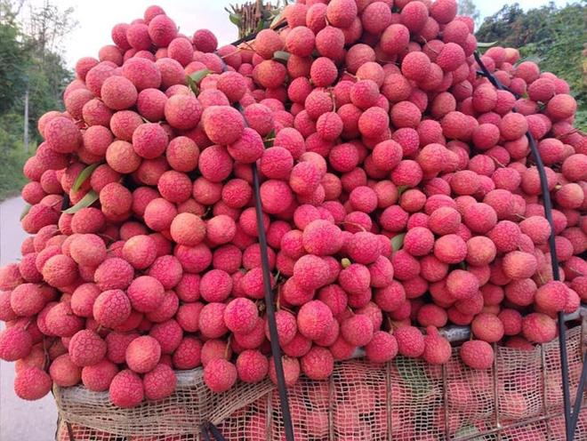 Dân mạng Việt khoe những trái vải bán trong siêu thị Nhật, 120k được mỗi 7 quả mà vẫn 'cháy hàng' - Ảnh 1