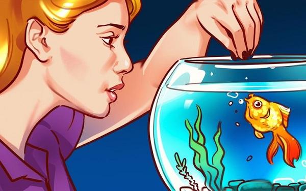 4 lợi ích không ngờ khi nuôi cá cảnh trong nhà - Ảnh 1