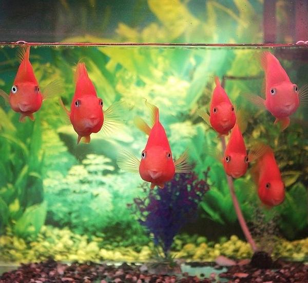 4 lợi ích không ngờ khi nuôi cá cảnh trong nhà - Ảnh 4