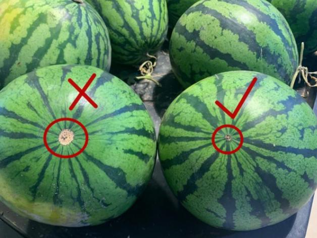 6 cách chọn dưa hấu siêu đơn giản nhìn qua là biết, đảm bảo dưa ngon ngọt, nhiều nước - Ảnh 4