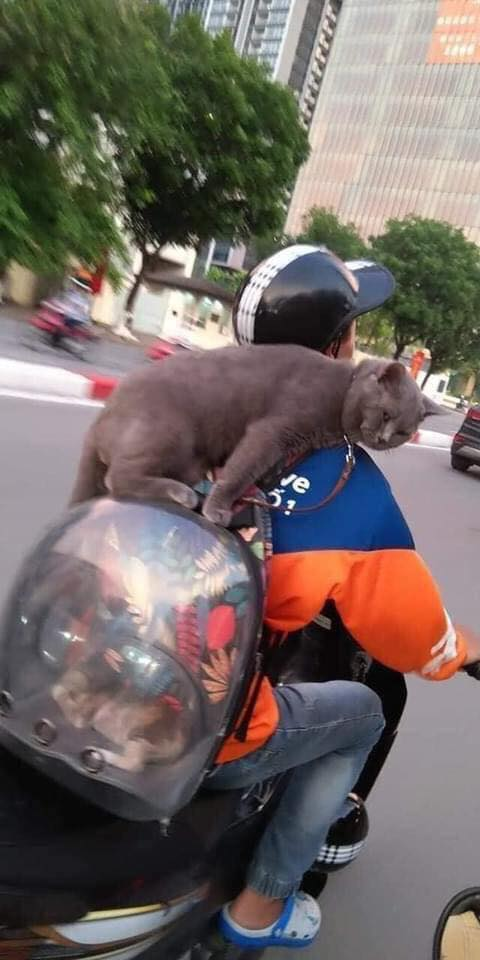 Khuôn mặt lườm nguýt, khó ở của chú mèo ngồi vắt vẻo trên ba-lô phi hành đi dạo phố khiến người đi đường không thể ngó lơ - Ảnh 1