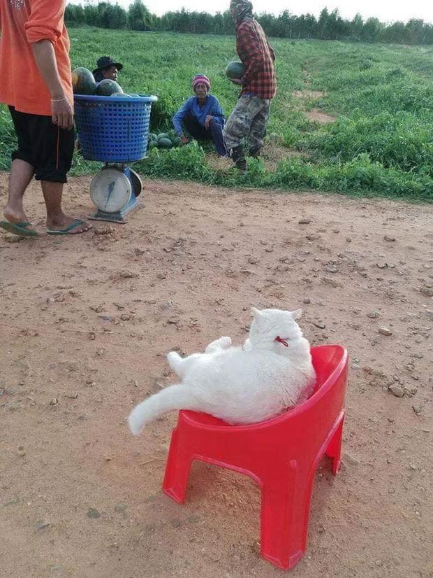 Ông mèo trông quầy dưa hấu bất ngờ nổi tiếng vì biểu cảm nhăn nhó khó chịu - Ảnh 5