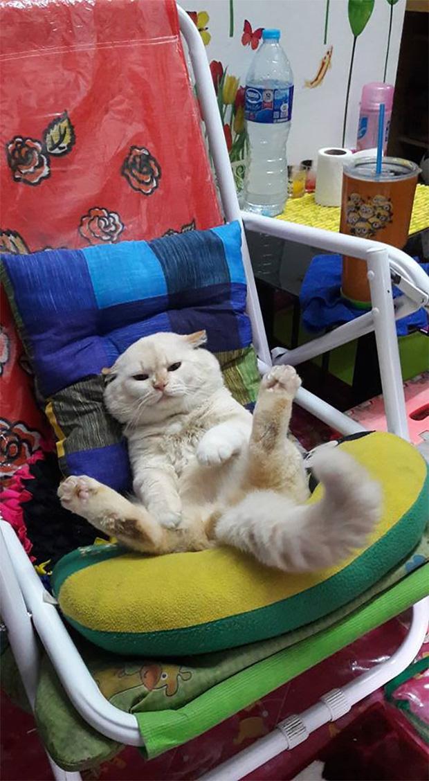 Ông mèo trông quầy dưa hấu bất ngờ nổi tiếng vì biểu cảm nhăn nhó khó chịu - Ảnh 9