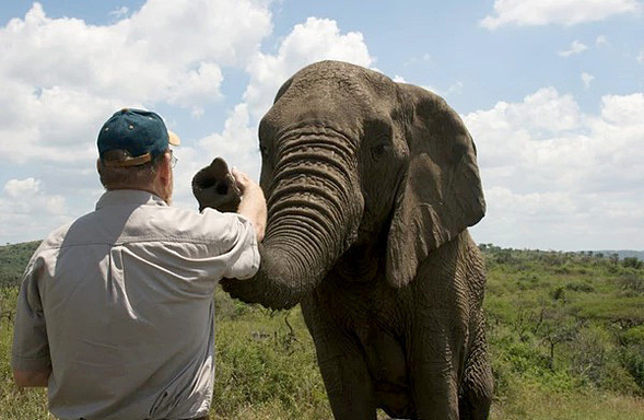 Vì sao đàn voi đi bộ 12 tiếng đến đưa tiễn một người qua đời, viếng mộ suốt 7 năm? - Ảnh 2
