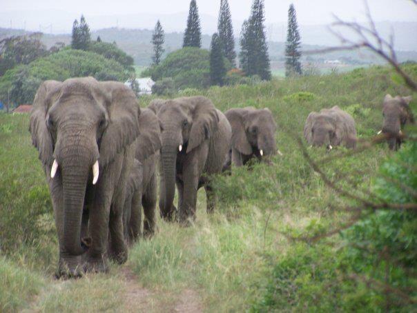 Vì sao đàn voi đi bộ 12 tiếng đến đưa tiễn một người qua đời, viếng mộ suốt 7 năm? - Ảnh 3