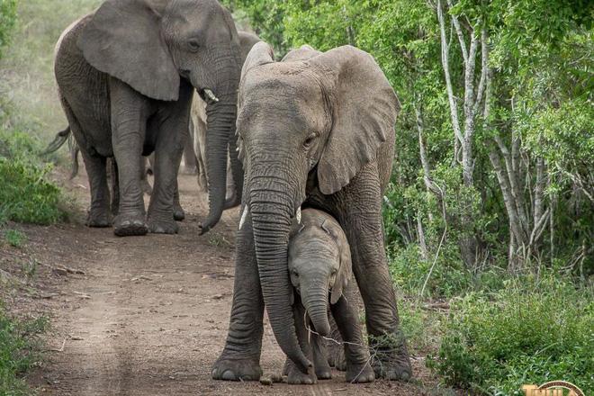 Vì sao đàn voi đi bộ 12 tiếng đến đưa tiễn một người qua đời, viếng mộ suốt 7 năm? - Ảnh 4
