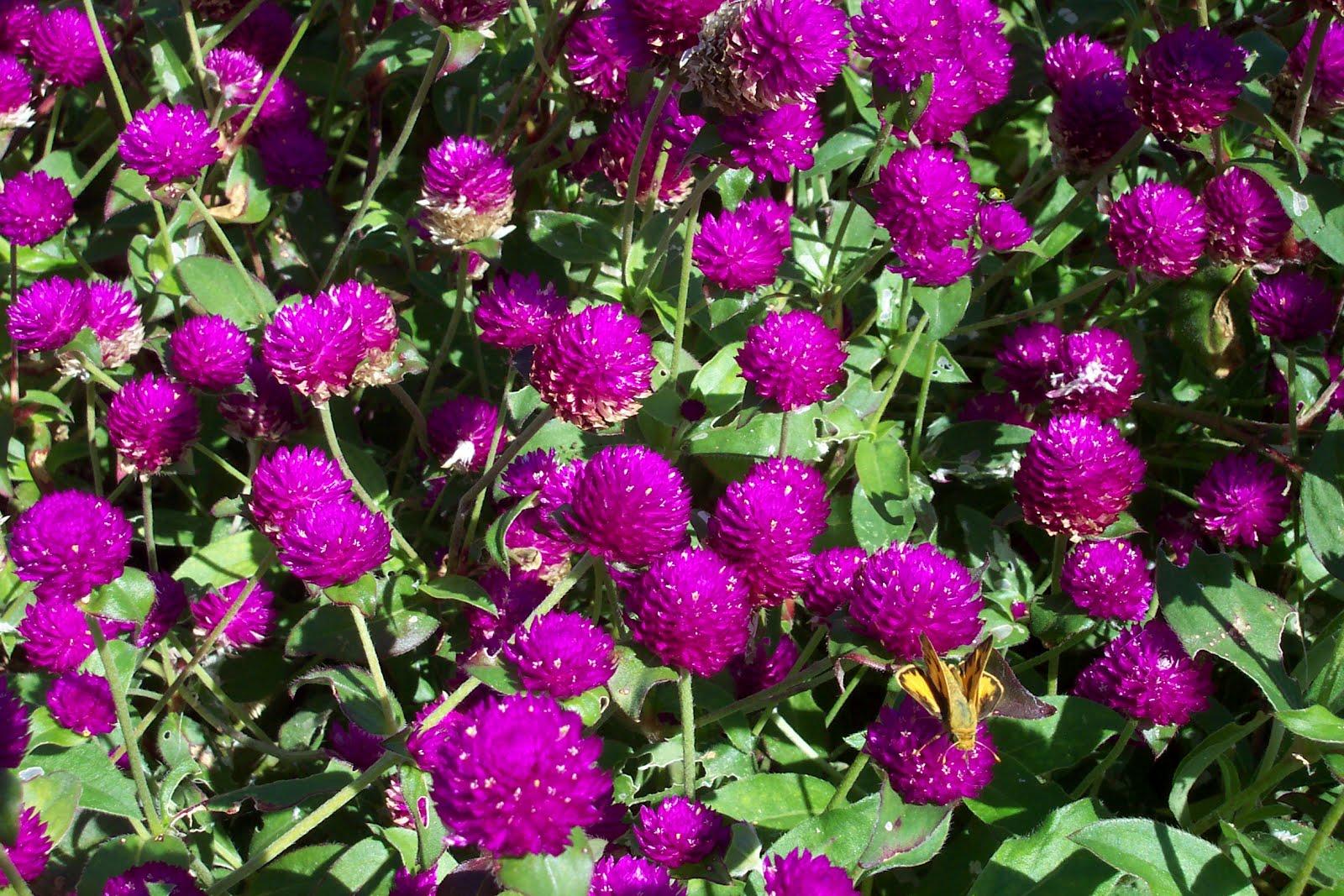 Tổng hợp các loại hoa dễ trồng quanh năm nở rực rỡ rất được ưa chuộng - Ảnh 5