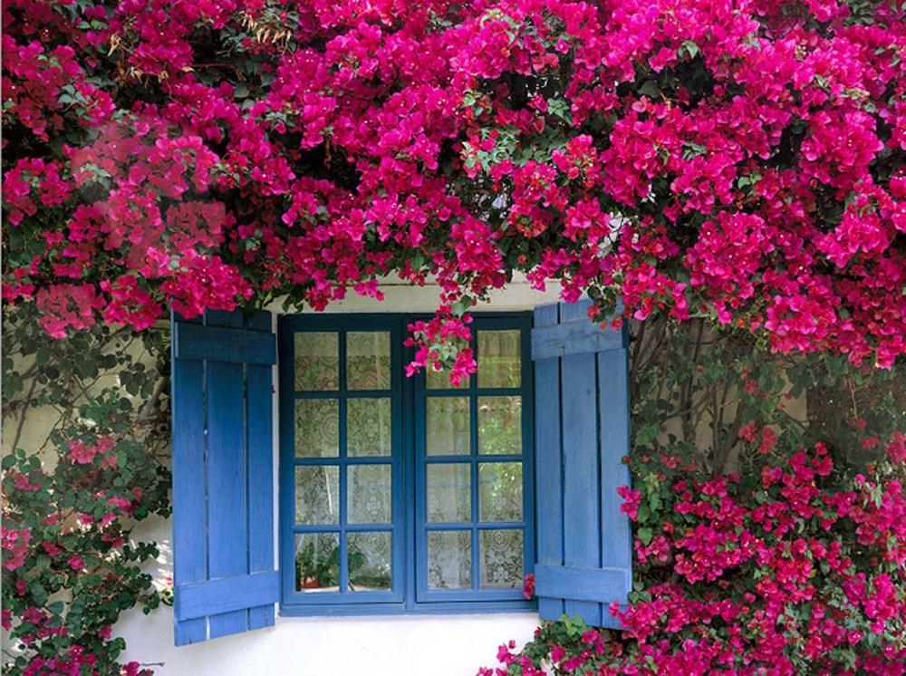 Tổng hợp các loại hoa dễ trồng quanh năm nở rực rỡ rất được ưa chuộng - Ảnh 2