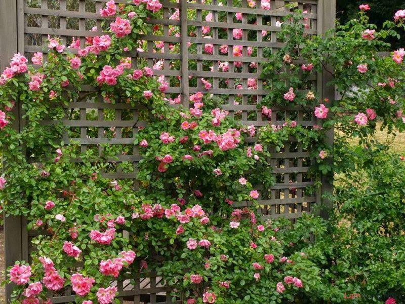 Tổng hợp các loại hoa dễ trồng quanh năm nở rực rỡ rất được ưa chuộng - Ảnh 1