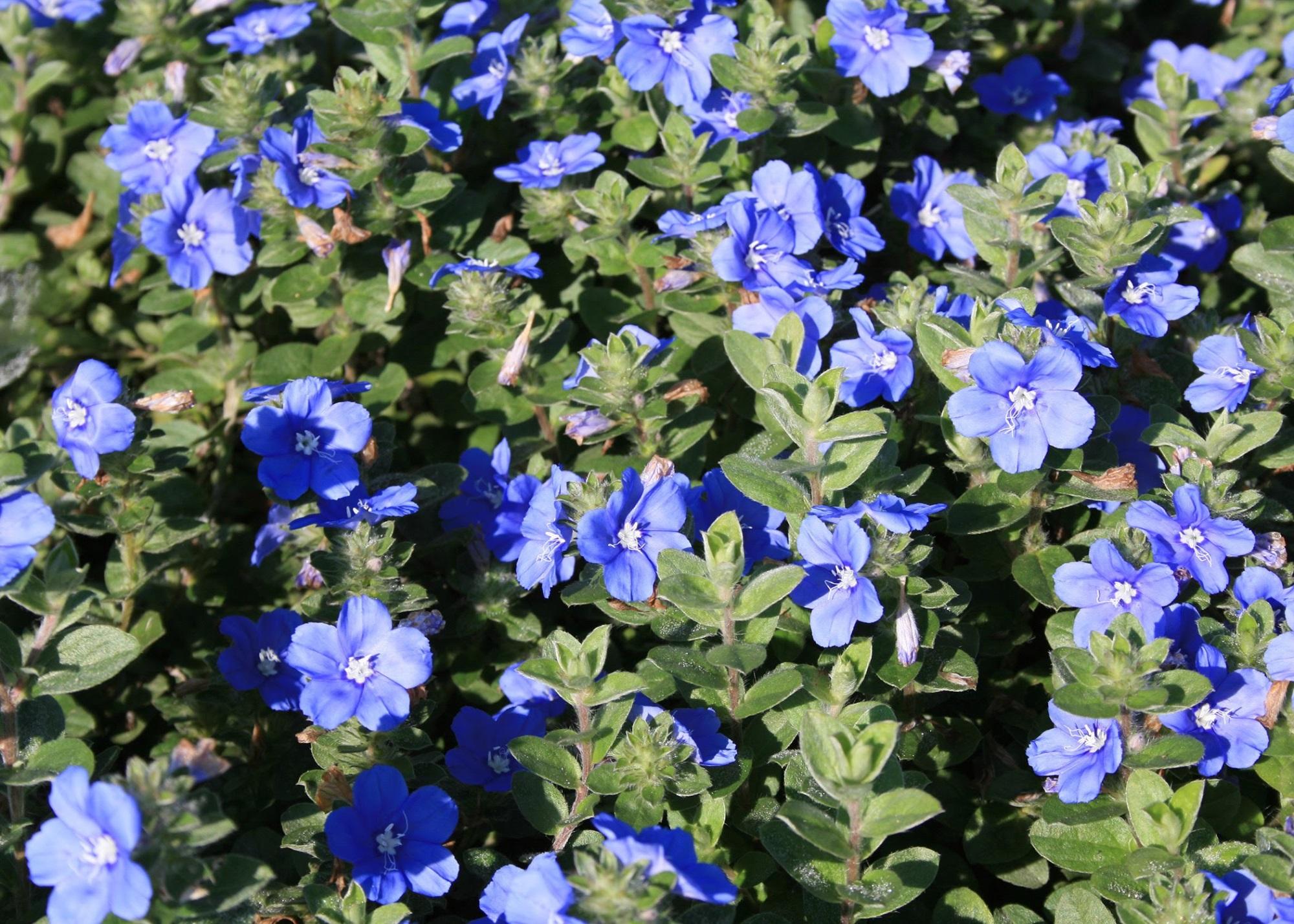 Tổng hợp các loại hoa dễ trồng quanh năm nở rực rỡ rất được ưa chuộng - Ảnh 4