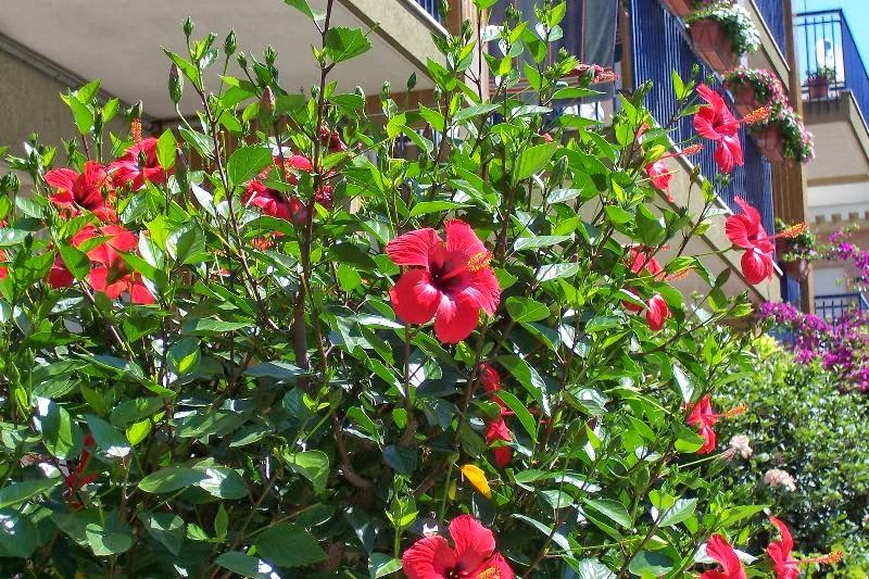 Tổng hợp các loại hoa dễ trồng quanh năm nở rực rỡ rất được ưa chuộng - Ảnh 7