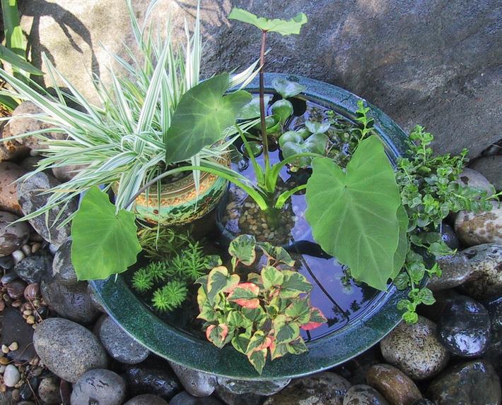 12 cách tự chế thác nước nhân tạo cho vườn nhà đón Tết siêu đẹp mà không mất quá nhiều tiền - Ảnh 11