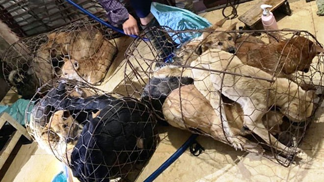 Khởi tố bà trùm xinh đẹp cùng 15 đối tượng mang súng điện đi trộm 100 tấn chó ở Thanh Hóa - Ảnh 3