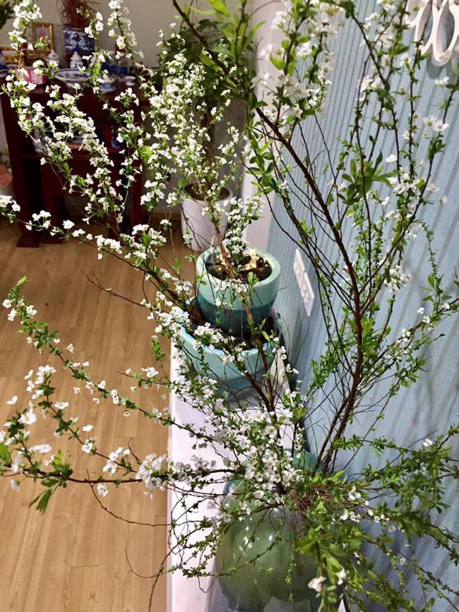 5 loại hoa được săn lùng nhiều nhất để làm đẹp nhà Tết Kỷ Hợi - Ảnh 1