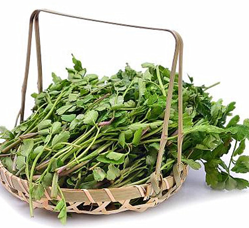 Ăn nhiều 5 loại rau này, vừa đẹp da, giảm cân lại trị táo bón hiệu quả - Ảnh 4