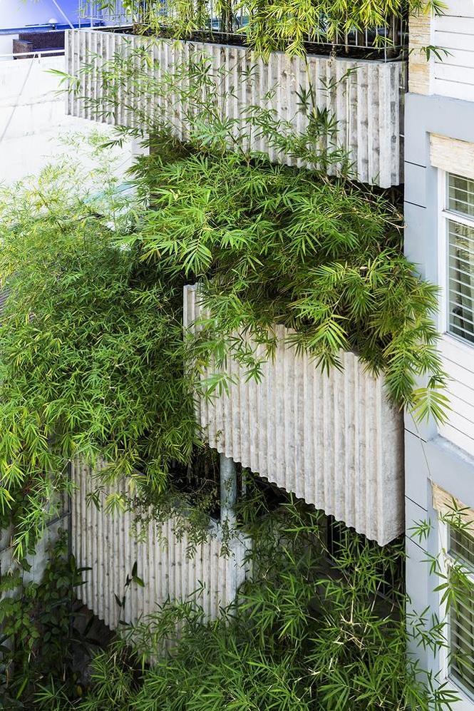 'Nhà tre' như rừng cây trong hẻm Sài Gòn, vừa tắm vừa nghe chim hót - Ảnh 2
