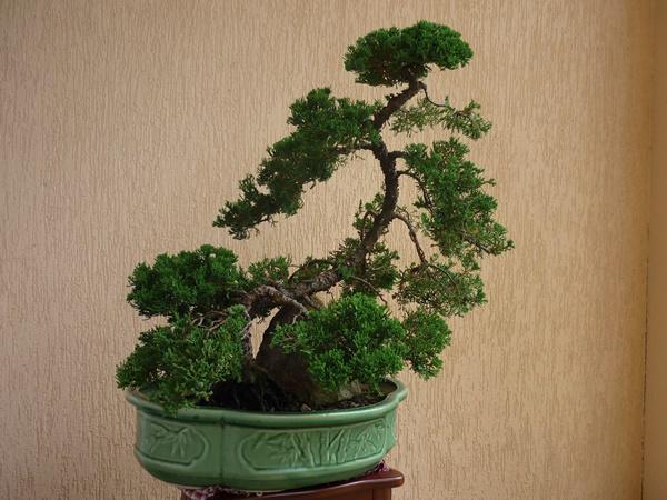 """7 loại cây người giàu không bao giờ bày trong nhà, muốn nghèo hèn cứ rước vào đặt """"chơi"""" - Ảnh 3"""