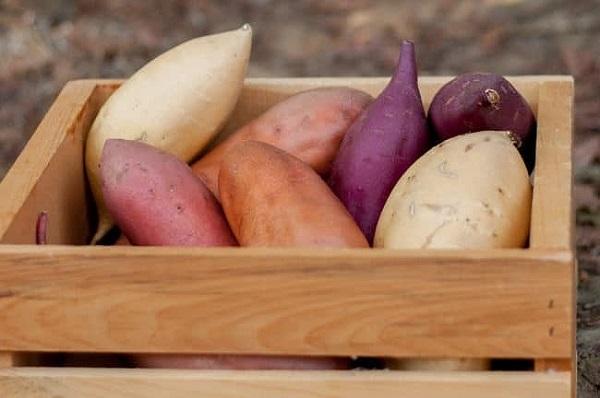 Ăn khoai lang theo 7 cách này gây hại sức khỏe đủ đường - Ảnh 3