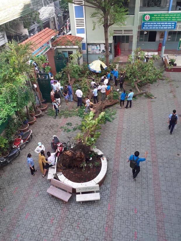 Nhân chứng vụ cây đổ khiến nhiều học sinh thương vong: 'Nghe tiếng cây đổ 'rầm' rất to, sau đó có nhiều cháu học sinh kêu la thảm thiết' - Ảnh 1