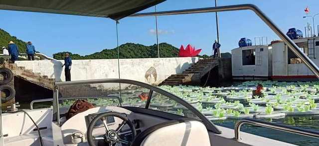 Thả 3 vạn hoa đăng nhựa xuống biển Cát Bà là để 'bảo vệ môi trường' - Ảnh 7