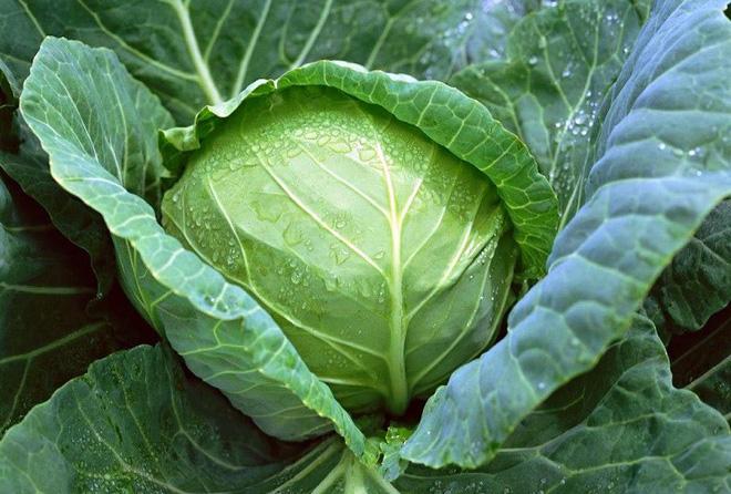 Người bị bệnh thận yếu nên và không nên ăn những loại thực phẩm gì để cải thiện tình trạng bệnh? - Ảnh 4