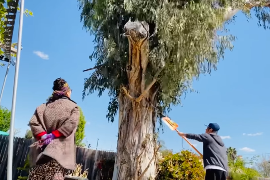 Hôm trước vừa làm công nhân, hôm nay đã thấy Bằng Kiều làm nông dân đi thu hoạch hoa quả, tỉa cây cực thành thạo - Ảnh 2