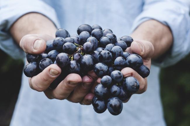 10 loại trái cây giúp làn da khỏe đẹp, trắng hồng và luôn tươi trẻ mà phụ nữ nhất định nên biết - Ảnh 1