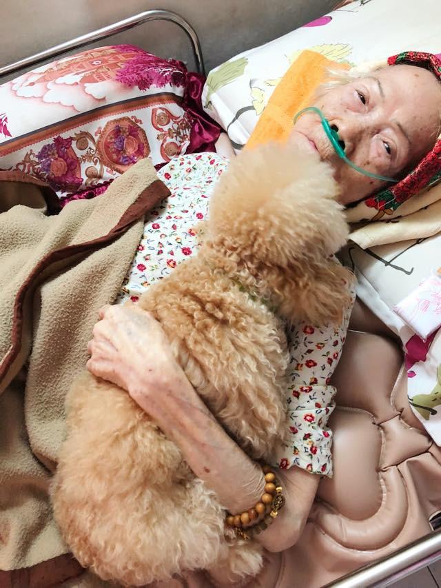 Bức ảnh con chó nép bên bà ngoại lúc hấp hối và câu chuyện cảm động do cháu gái kể - Ảnh 1