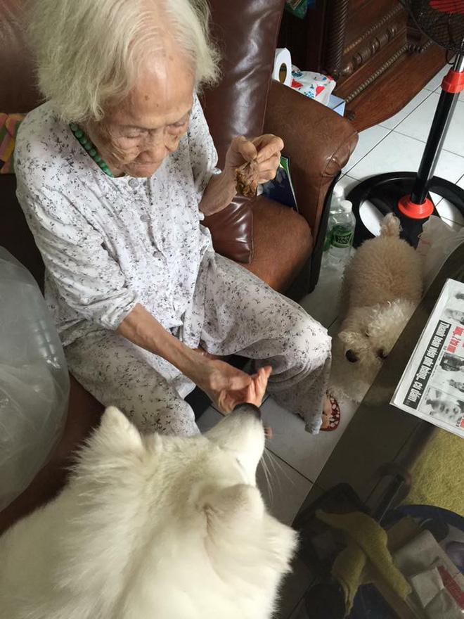 Bức ảnh con chó nép bên bà ngoại lúc hấp hối và câu chuyện cảm động do cháu gái kể - Ảnh 4