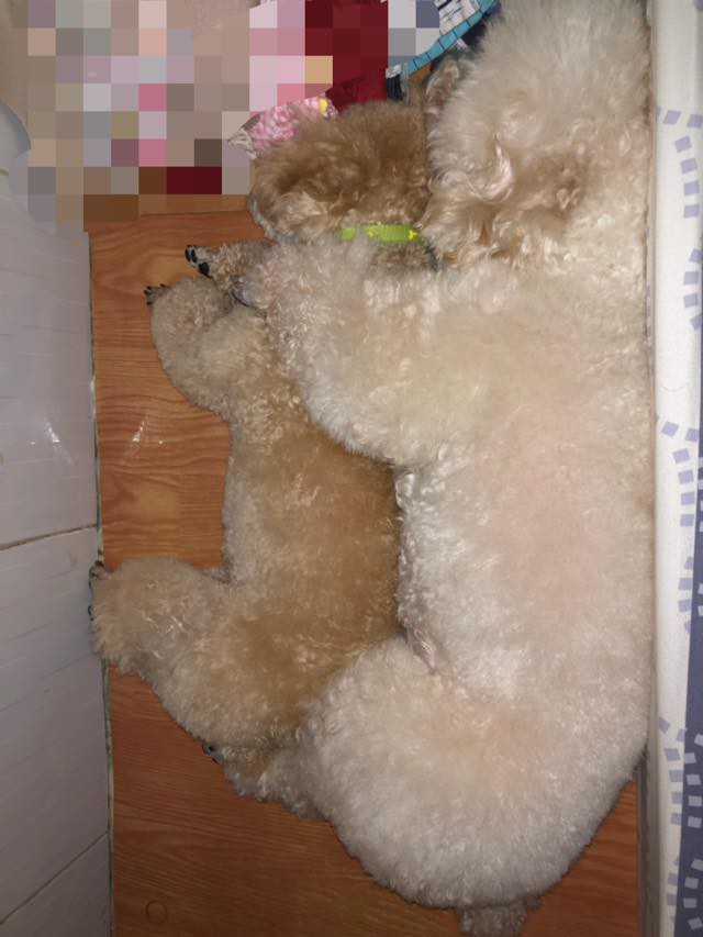 Bức ảnh con chó nép bên bà ngoại lúc hấp hối và câu chuyện cảm động do cháu gái kể - Ảnh 5