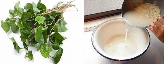 Mẹo trị ho bằng nước vo gạo và rau diếp cá - Ảnh 3