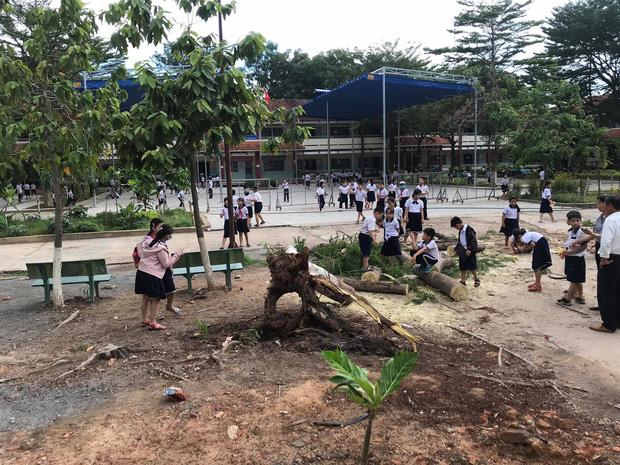 Bình Dương: Cây phượng trong sân trường bật gốc, ngã đổ ngay sau khi học sinh ra về - Ảnh 3