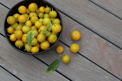 Cách trồng quất tại nhà cực đơn giản nhanh cho thu hoạch, chị em tha hồ lấy quả làm mứt trị ho  - Ảnh 1